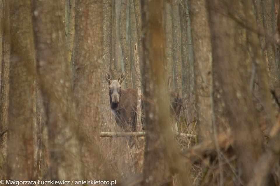 biebrzanski park narodowy los 960x638 10 miejsc na weekend w Polsce