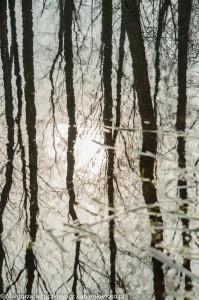 biebrzanski park narodowy odbicia 199x300 Biebrzański Park Narodowy odbicia