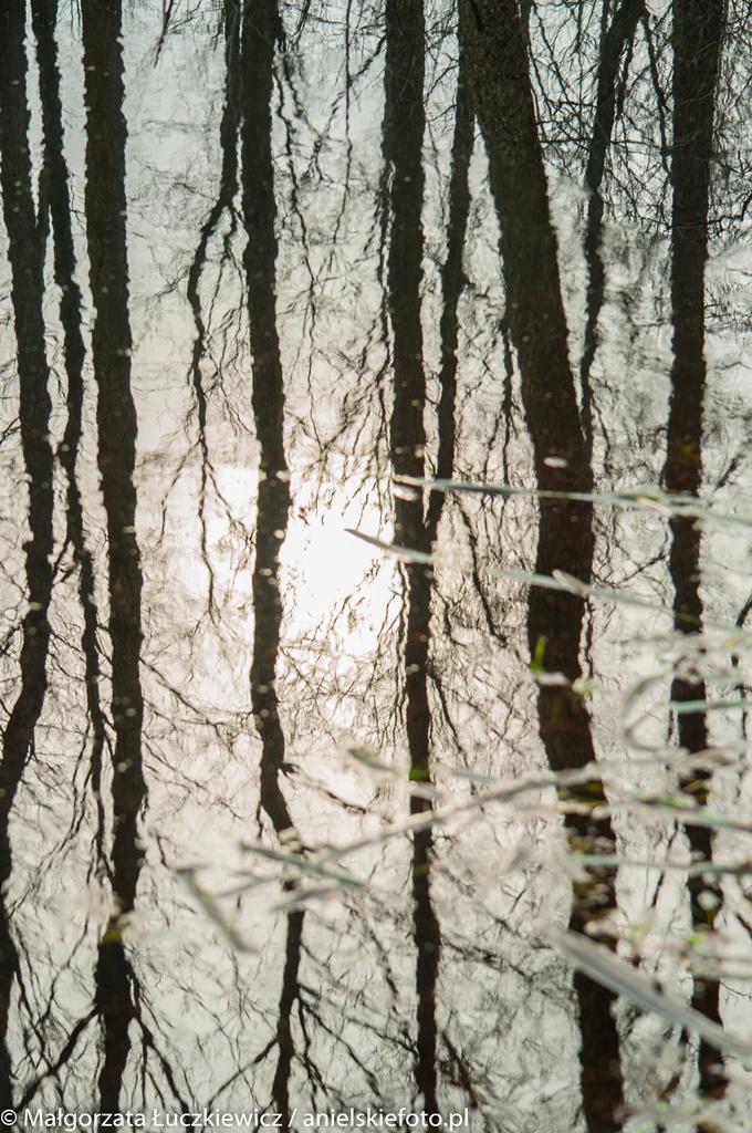 biebrzanski park narodowy odbicia Plener fotograficzny nad Biebrzą