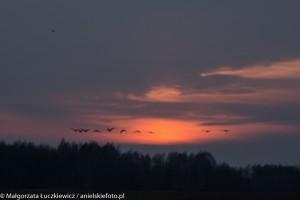 biebrzanski park narodowy zachod slonca 300x200 Biebrzański Park Narodowy zachód słońca