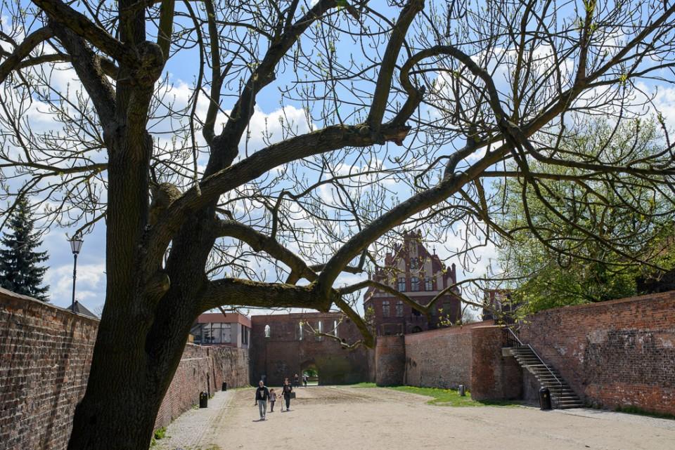 Toruń zamek krzyżacki 960x641 Majówka w Toruniu