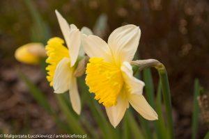 fotografia zblizeniowa kwiaty 300x200 fotografia zbliżeniowa kwiaty
