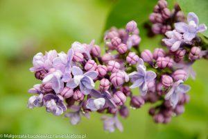 makrofotografia kwiaty 300x200 makrofotografia kwiaty bez