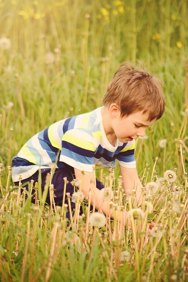 sesja dziecieca w dmuchawcach Olo   sesja zdjęciowa w rzepaku
