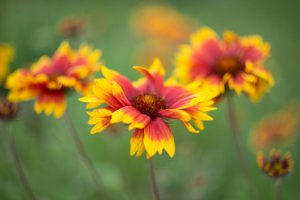 kwiaty makrofotografia 300x200 kwiaty makrofotografia