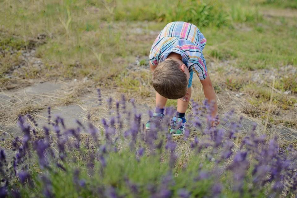 sesja dziecieca w lawendzie Powsin 960x641 Sesja w Powsinie w Ogrodzie Botanicznym