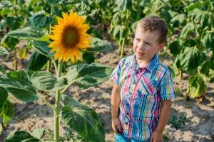 sesja dziecieca w slonecznikach 300x200 sesja dziecięca w słonecznikach