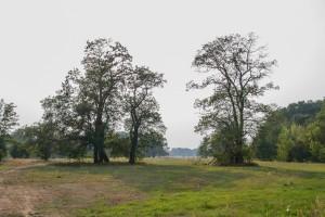 rogalinski park krajobrazowy 300x200 Rogalinski Park Krajobrazowy