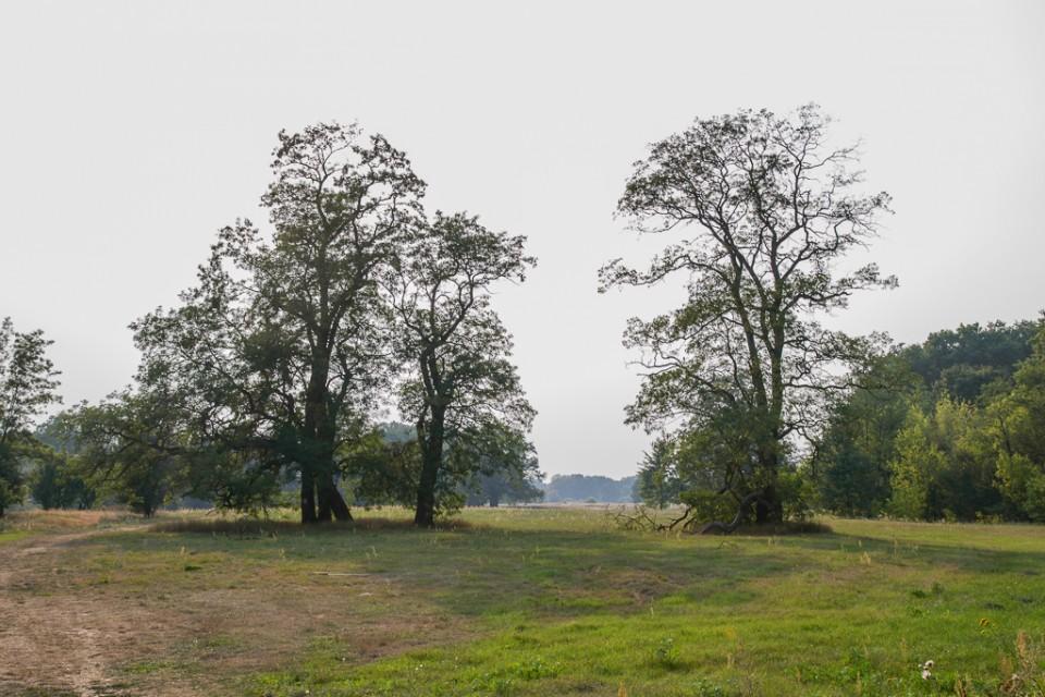 rogalinski park krajobrazowy 960x640 Uniejów, Rogalin, Poznań