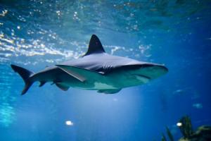 Wroclaw Afrykarium rekin 300x200 Wroclaw Afrykarium rekin