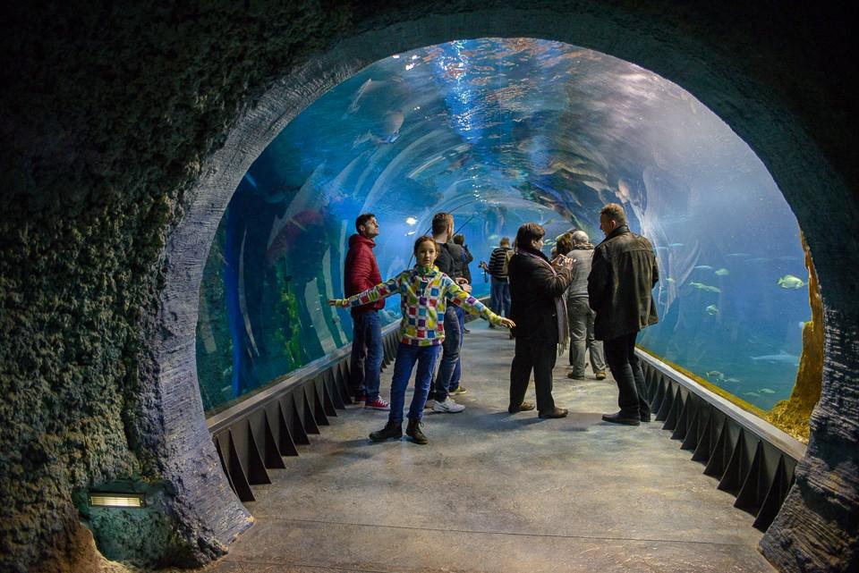 Wroclaw Afrykarium tunel 960x641 Weekend we Wrocławiu