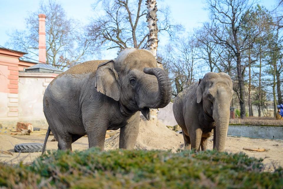 Zoo Wroclaw slonie 960x641 Weekend we Wrocławiu