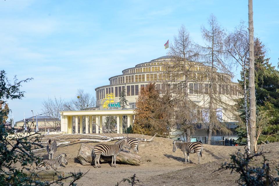 Zoo Wroclaw zebry 960x641 10 miejsc na weekend w Polsce