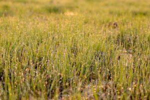 biebrzanski park narodowy rosa 300x200 biebrzanski park narodowy rosa