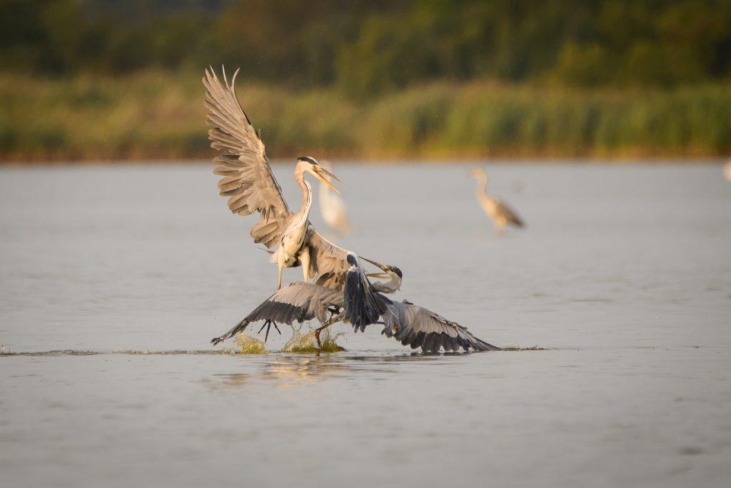 stawy milickie birdwatching 1024x684 Stawy Milickie plener fotograficzny