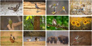 Kalendarz 2019 przyroda 300x152 Kalendarz 2019 przyroda