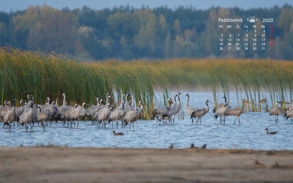 Kalendarz2020pazdziernik 1920 1200 72 1024x640 Październik 2020 – tapeta na pulpit