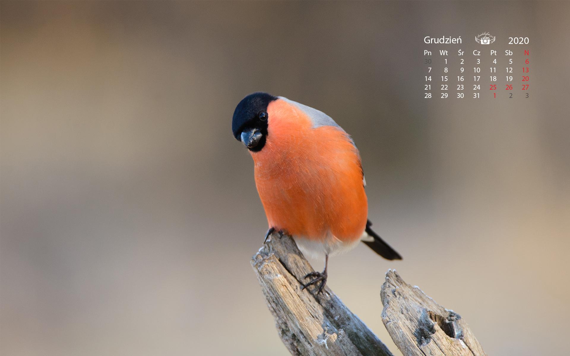 Kalendarz2020grudzien 1920 1200 72 Grudzień 2020 – tapeta na pulpit